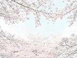 爽やかな春の風景