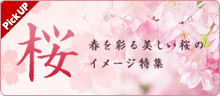 桜イメージ特集