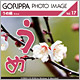 GORIPPA PHOTO IMAGE Vol.17 うめ編