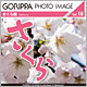 GORIPPA PHOTO IMAGE Vol.18 さくら編
