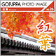 GORIPPA PHOTO IMAGE Vol.26 紅葉