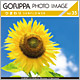 GORIPPA PHOTO IMAGE Vol.35 ひまわり