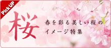 特集ページ「桜」